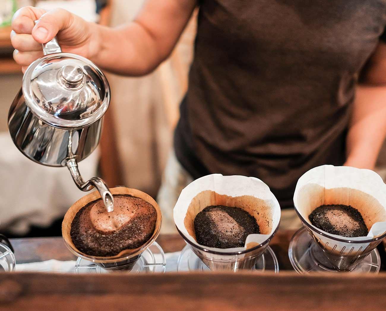 , Coffea Canephora